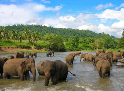 Достопримечательности-Шри-Ланки