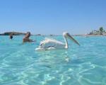 Кипр как альтернатива Египту