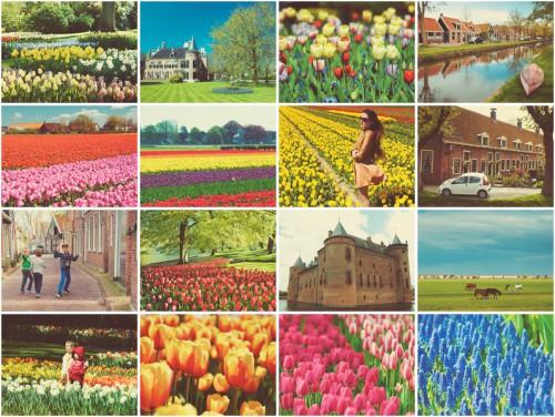 тюльпаны май